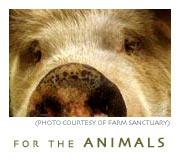 animals1